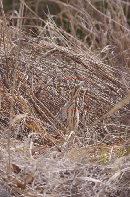 2012-03-22_456aa.jpg