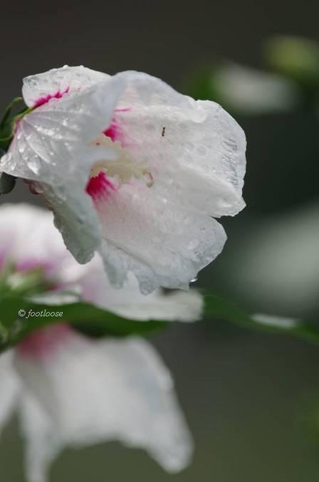 2012-07-14_049.jpg