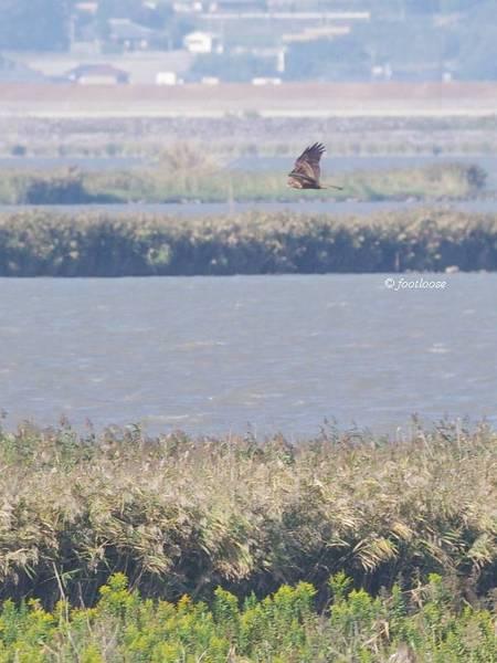 2012-10-12_463.jpg