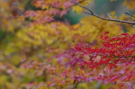 2012-11-23_061.jpg