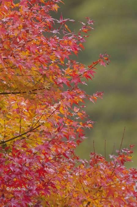2012-11-23_156.jpg