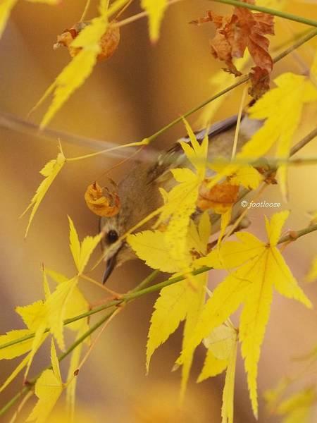 2012-11-25_354.jpg