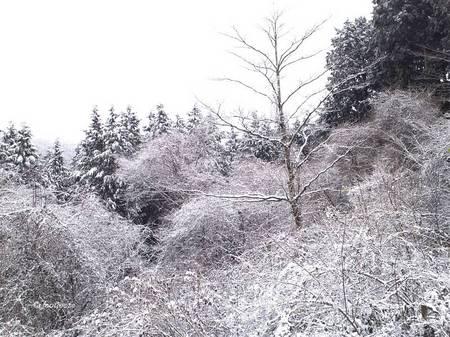 2013-12-21_050.jpg